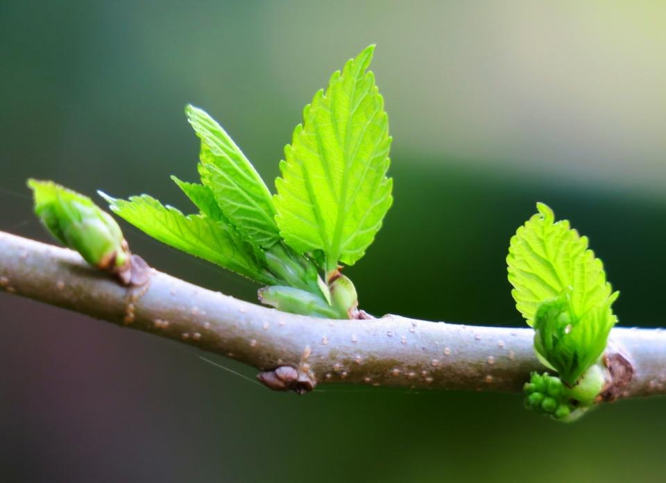 户外阳光自然树木树枝绿色鲜嫩叶子图片