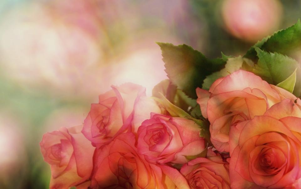 梦幻虚化背景浪漫粉色玫瑰花朵