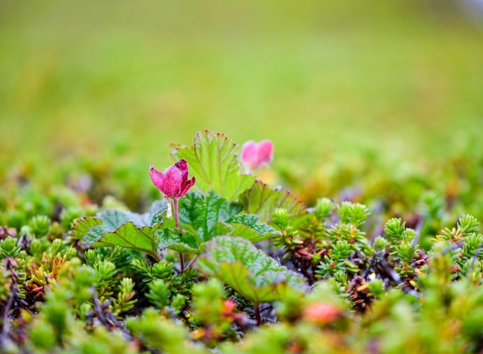 背景虚化绿色树丛中生长的红色花朵