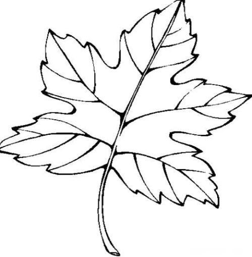 树叶简笔画图片