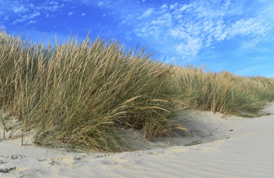 天空沙地枯草云蓝天草地
