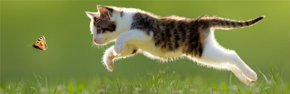 唯美清新可爱小猫图片