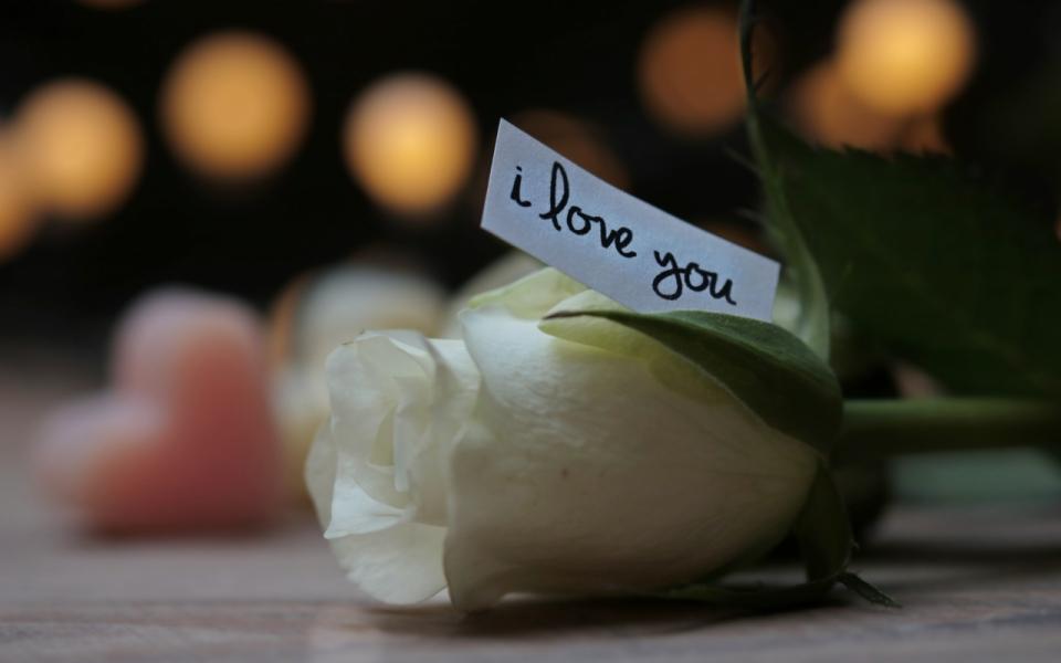 虚化光点唯美背景桌面白色花朵玫瑰