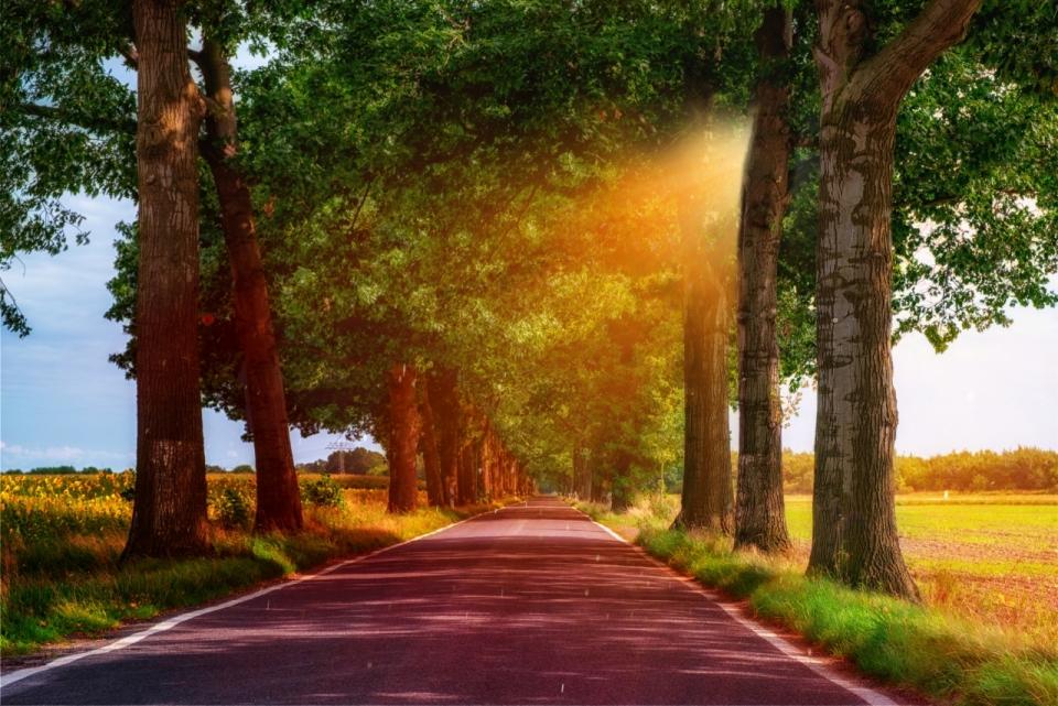 作品简介 午后阳光透过层层的树荫照耀在林间小道之上,整个画面尽显图片